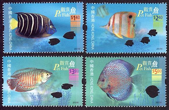 Pet Fish - Non-native fish of Hong Kong